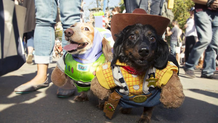 Concurso de disfraces para mascotas en Mazatenango   Febrero 2018