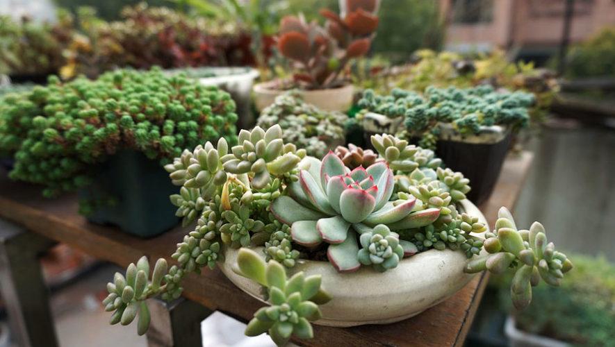 Gran festival de cactus y suculentas en el Zoológico La Aurora| Marzo 2018