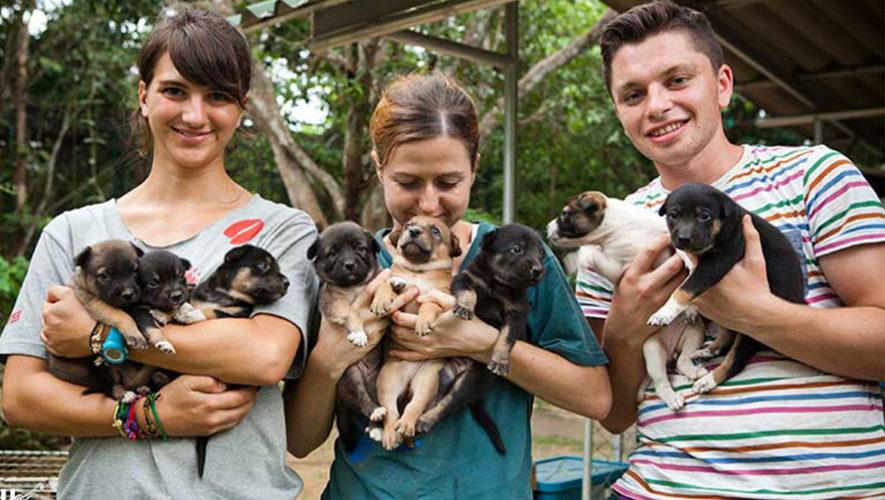 Buscan voluntarios para un refugio de mascotas en Quetzaltenango