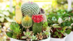 Conferencia gratuita sobre los cuidados de cactus en Guatemala | Marzo 2018