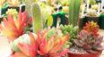 Domingo Verde, festival familiar de suculentas y cactus | Abril 2018