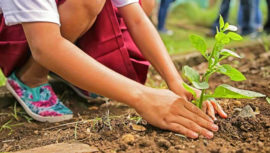 Actividades que podrás hacer para celebrar el Día de la Tierra 2018