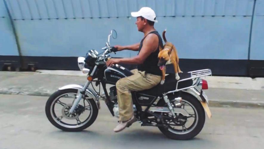 Chispa, la perrita que viaja en moto junto a Don Reginaldo por Escuintla