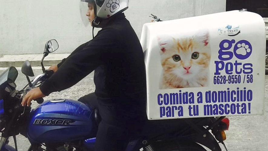 Go Pets, el servicio a domicilio para mascotas en Guatemala