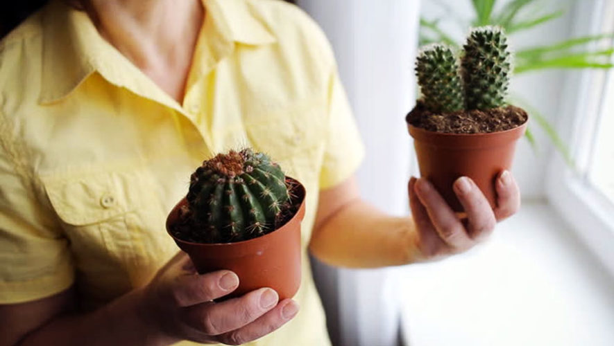 Curso sobre cultivo de cactus en San Miguel Petapa   Abril 2018
