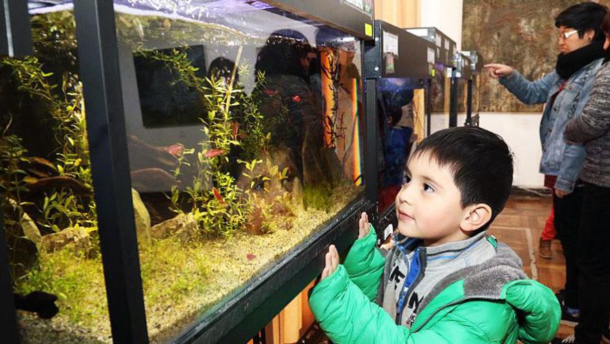 Festival de acuarios exóticos en Guatemala | Abril 2018