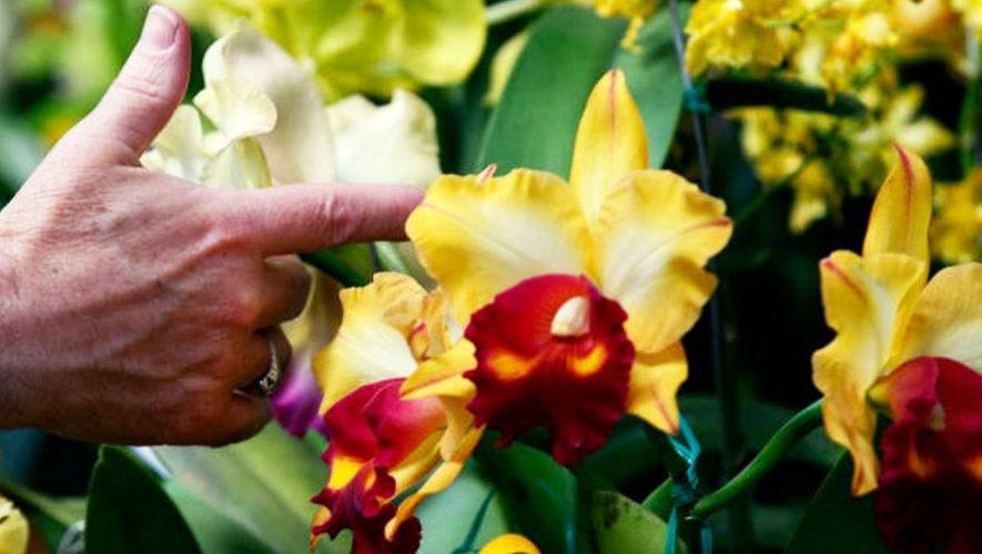 Taller sobre cultivo de orquídeas en Guatemala | Abril 2018