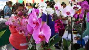 Exposición de Orquídeas en Antigua Guatemala | Mayo 2018