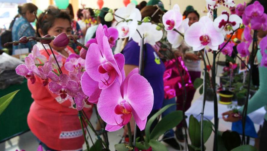 Exposición de Orquídeas en Antigua Guatemala   Mayo 2018