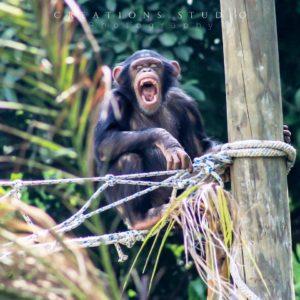 (Créditos: Parque Zoológico Nacional La Aurora)