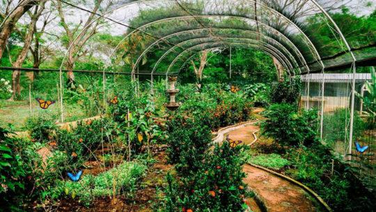 mariposarios y aviarios en Guatemala