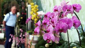 Exposición Nacional de Orquídeas en el Zoológico La Aurora | Junio 2018