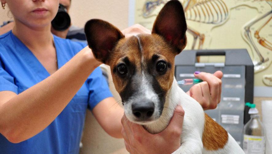 Jornada gratuita de vacunación de mascotas en San Cristóbal   Junio 2018