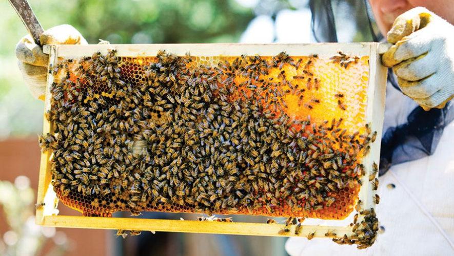 Tour por campos de miel y abejas en Antigua Guatemala | Mayo 2018