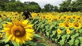 Tours en Guatemala para los amantes de las flores