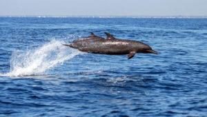Avistamiento de ballenas y delfines en Santa Rosa | Enero - Abril 2019