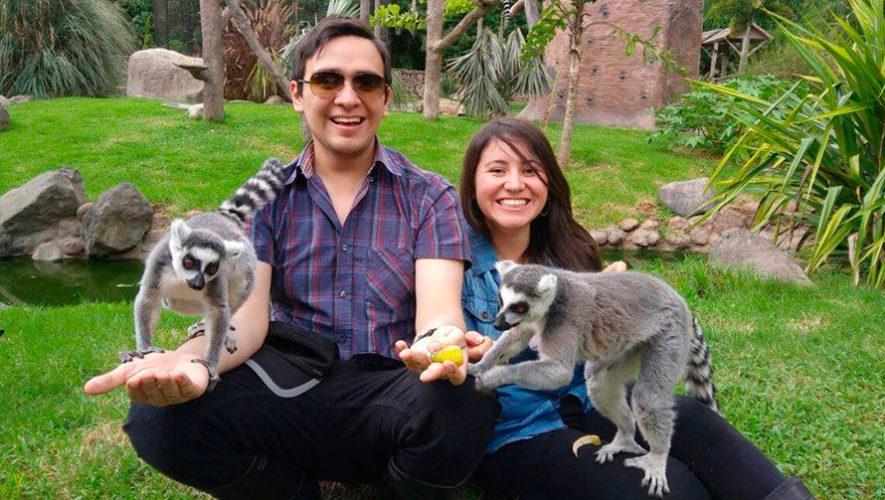 Convocatoria para ser voluntario del Zoológico La Aurora en Guatemala para el 2019