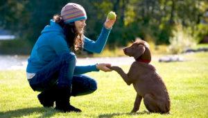 Curso para educar cachorros en Guatemala | Febrero 2019