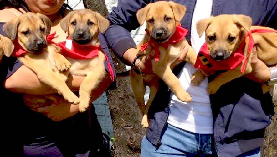 Feria de adopción de mascotas en Guatemala | Enero 2019