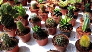 Exposición, venta e intercambios de plantas exóticas   Febrero 2019
