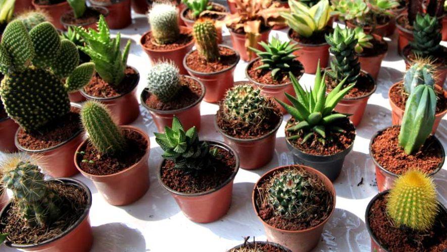 Exposición, venta e intercambios de plantas exóticas | Febrero 2019