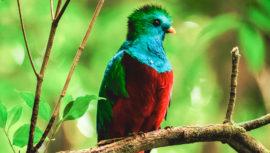 Foto del Quetzal fue publicada en Animal Planet