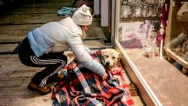 Recaudan frazadas para perritos rescatados en Guatemala