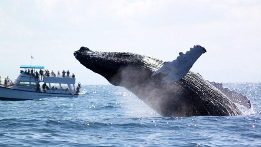 Viaje para ver ballenas y delfines en Guatemala | Enero 2019