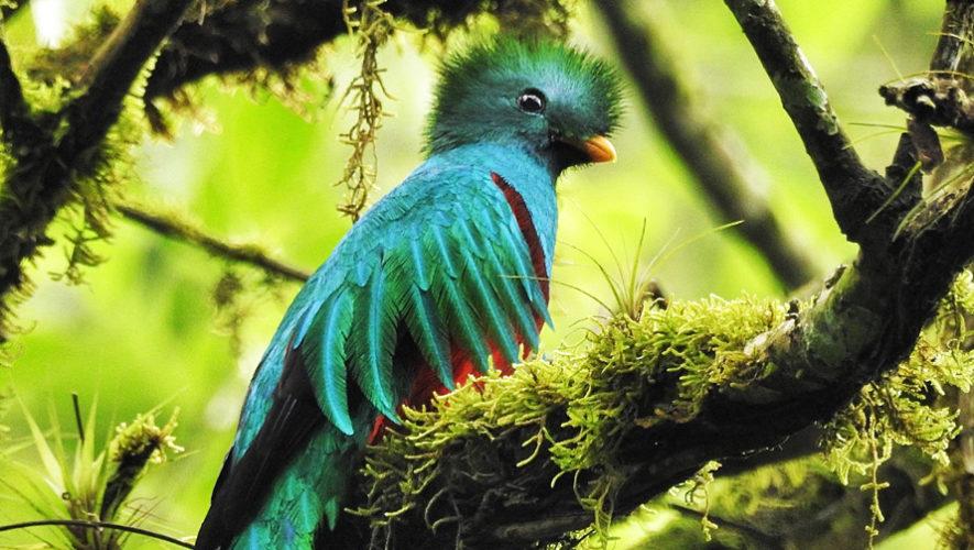 Viaje para ver quetzales en San Marcos | Febrero 2019