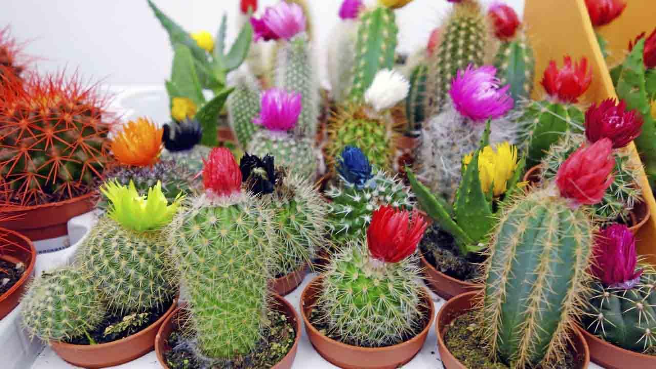 (Foto: Jardineria On)