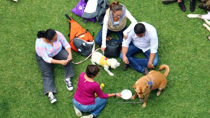 Adopciones de mascotas en zona 13 | Febrero 2019