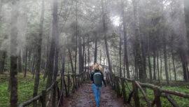 Lugares con bosques nubosos en Guatemala