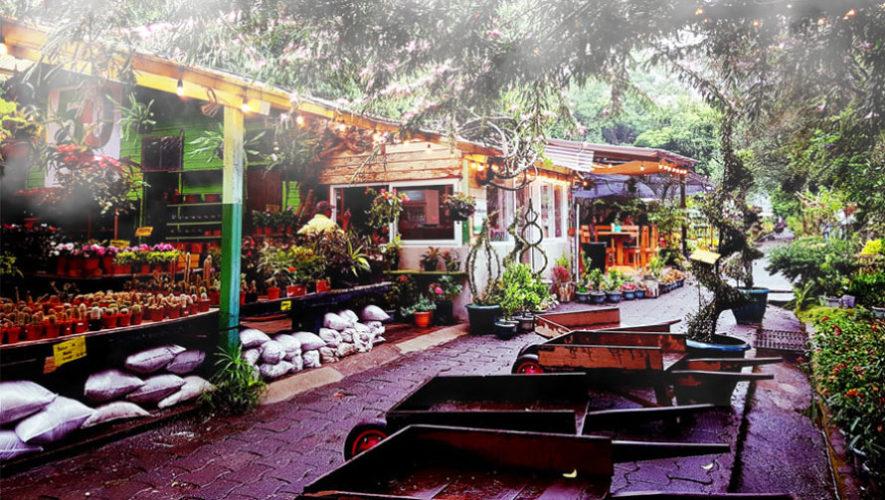 la cafetería ubicada dentro de un vivero en la Ciudad de Guatemala