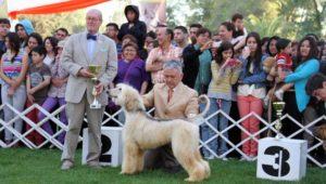 Exposición y competencia de perros en el Zoológico la Aurora | Febrero 2019