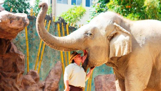 Historia de Trompita, el elefante que reside en el Zoológico La Aurora