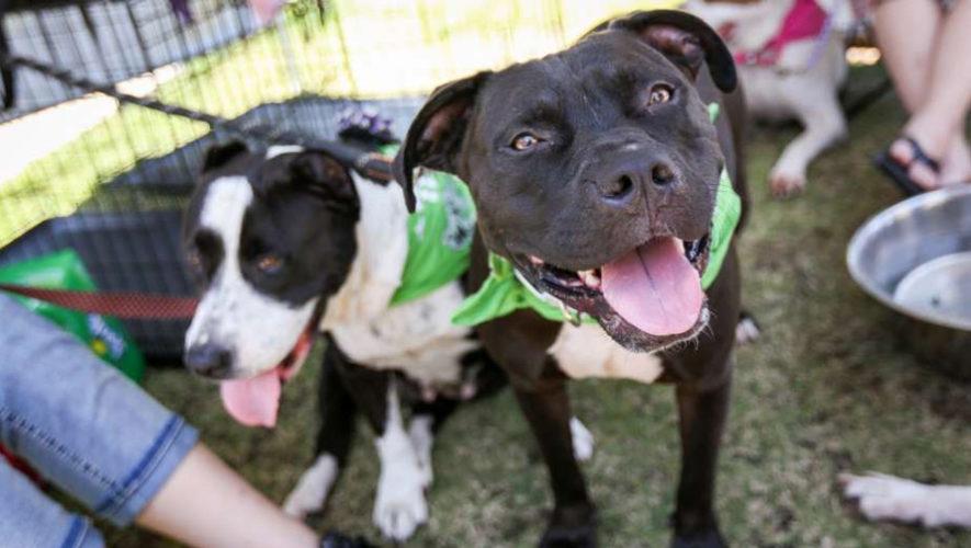 Jornada de adopción de mascotas en zona 10 | Febrero 2019