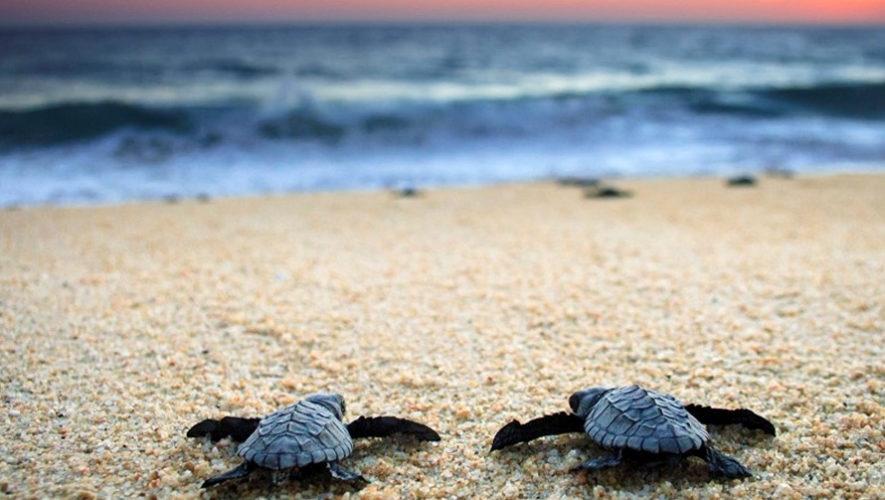 Viaje de un día para liberar tortugas en Monterrico | Febrero 2019