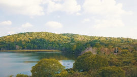 Concesiones Forestales Comunitarias han preservado los bosques de Guatemala