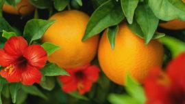 Quezalteca trajo nuevas combinacioes sabores tropicales a Guatemala