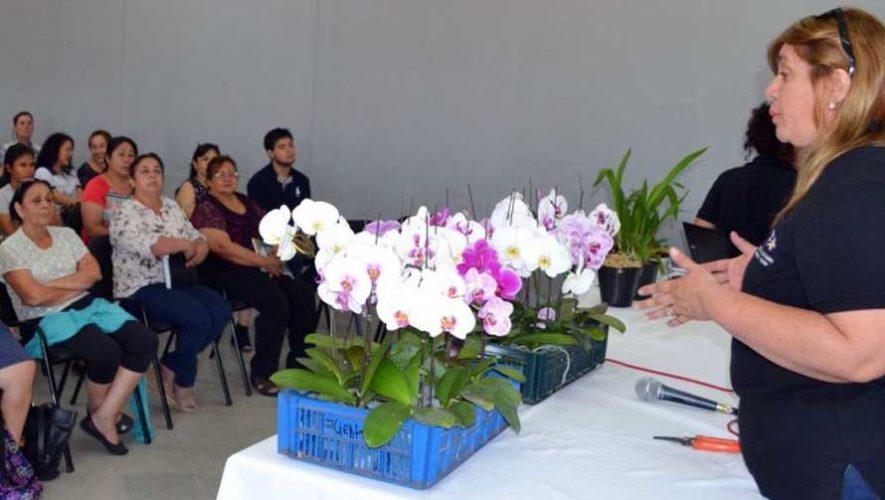 Taller de cultivo de orquídeas en zona 10 | Marzo 2019