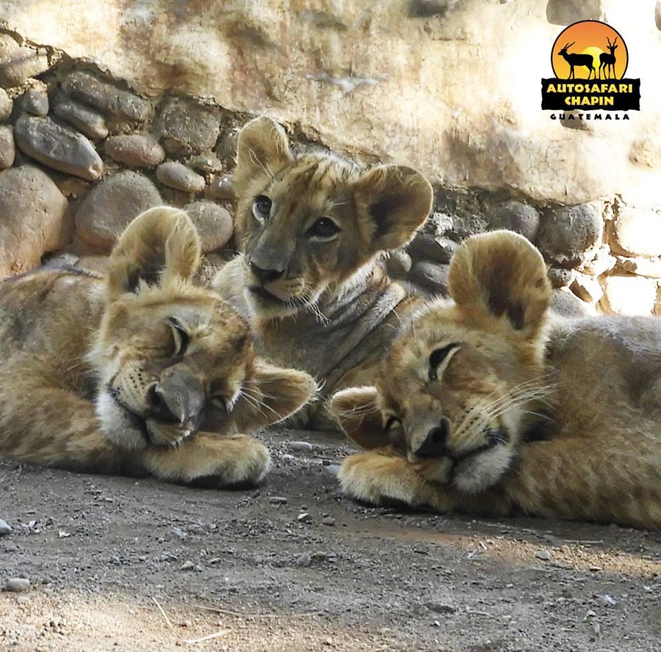 (Foto: Auto Safari Chapín)