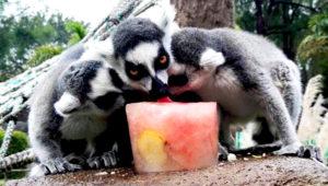 Día de Verano en el Zoológico La Aurora | Abril 2019