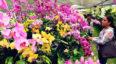 VII Exposición Nacional de Orquídeas en Antigua Guatemala   Mayo 2019