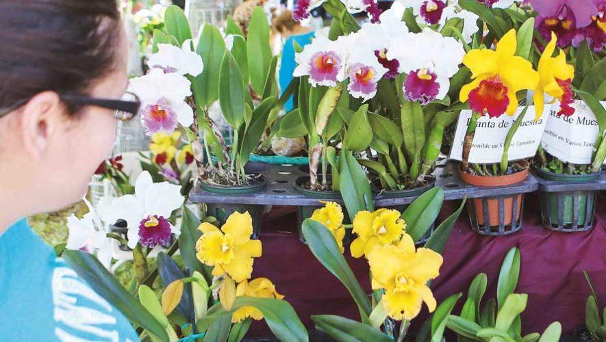 Exposición de plantas exóticas en Condado Concepción | Abril 2019