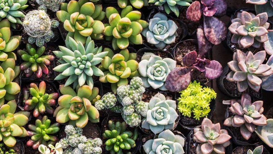 Festival de cactus y suculentas en Jalapa | Abril 2019