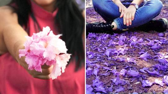 La flora que marca la época de Cuaresma y Semana Santa en Guatemala