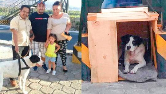 La historia de Spike, el perro que vivía debajo de una pasarela en Sacatepéquez