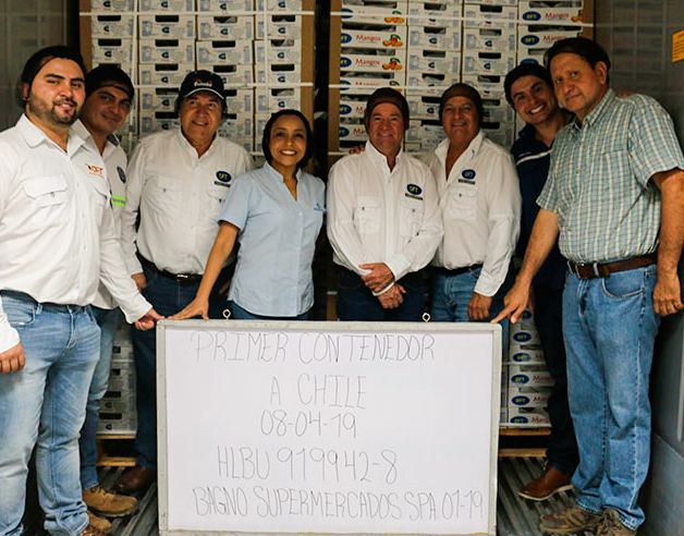 La primera exportanción de mango guatemalteco a Chile en abril de 2019