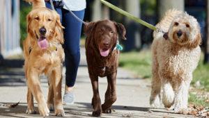 Caminata especial con mascotas en la Zona 5 | Mayo 2019