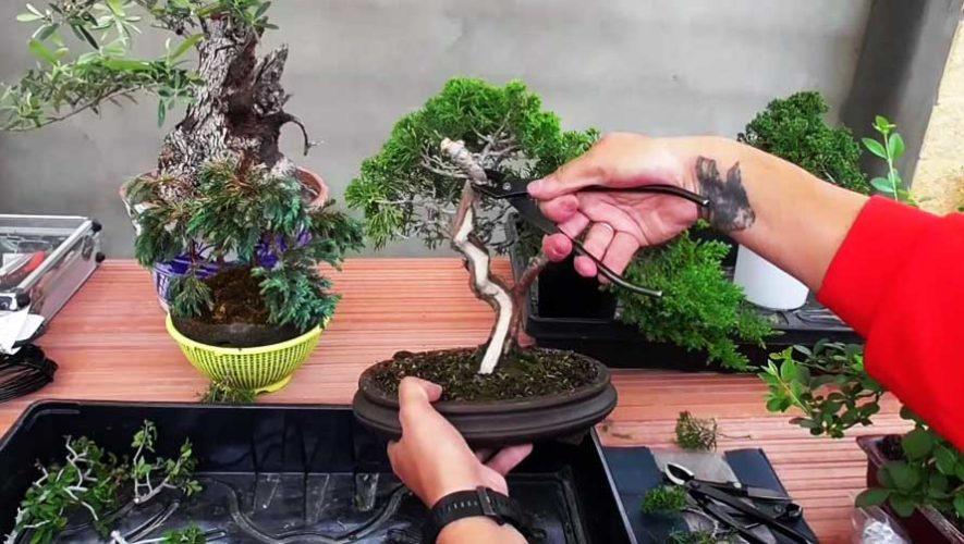 Curso básico de bonsái en Zona 9 | Junio 2019